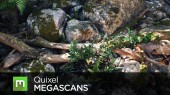Quixel - MEGASCANS - Subscription (1 year)